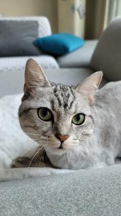 고양이미용셀프_240x426